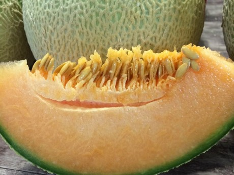 While Cantaloupe Crop Is Strong Consumption Is Down Summers without rain in these growing regions as well as careful field preparation and irrigation. while cantaloupe crop is strong consumption is down
