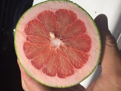 FreshPlaza com : Small grapefruit sizes mean strong prices