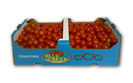 Yields moderately down for Mexican tomato growers